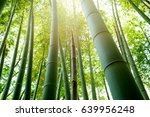Bamboo Grove Bamboo Shoots