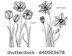 daffodils and tulips flowers... | Shutterstock .eps vector #640003678