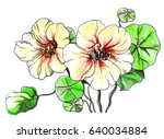 pale yellow nasturtium flower... | Shutterstock . vector #640034884