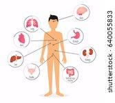 human body with internal organs.... | Shutterstock .eps vector #640055833