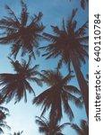 palm trees | Shutterstock . vector #640110784