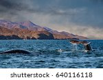 grey whale tail going down in... | Shutterstock . vector #640116118