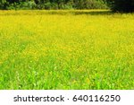 flowers on meadow | Shutterstock . vector #640116250