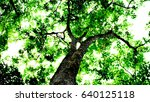 tree in the forest. nature... | Shutterstock . vector #640125118