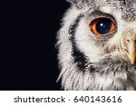Stock photo southern white faced owl 640143616