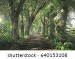 tree avenue | Shutterstock . vector #640153108