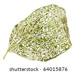 Macro Of Leaf Eaten By Bugs...
