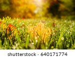 close up view of autumn leaves... | Shutterstock . vector #640171774
