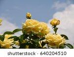 tokyo roses | Shutterstock . vector #640204510