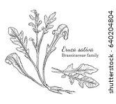 ink arugula herbal illustration.... | Shutterstock .eps vector #640204804