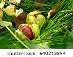 Chestnuts On The Grass