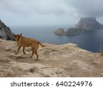 dog admires panorama on ibiza... | Shutterstock . vector #640224976