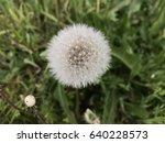 dandelion in nature   Shutterstock . vector #640228573