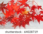 Maple Red Leaf Frozen In Ice...