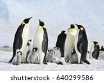 Stock photo emperor penguin colony at snow hill in antarctica 640299586