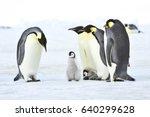 Emperor Penguin Colony At Snow...