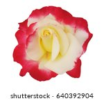 Stock photo red and white rose white background 640392904
