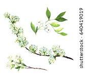 spirea flowers  white... | Shutterstock . vector #640419019