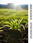 Small photo of plants agro green grass sunset