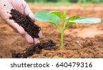 farmer hand giving plant...   Shutterstock . vector #640479316
