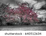 colorized single pink blossom... | Shutterstock . vector #640512634