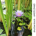 Small photo of Afloat area with water lily flower