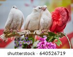 multicolored pigeons  one is... | Shutterstock . vector #640526719
