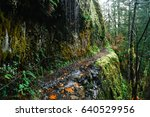 The Eagle Creek Trail In...