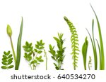 Green Plants Isolated On White...