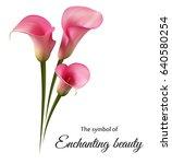 Stock vector realistic pink calla lily the symbol of enchanting beauty 640580254