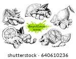 ginger and lemon in sketch... | Shutterstock .eps vector #640610236