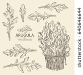 collection of arugula. hand... | Shutterstock .eps vector #640646644