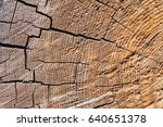 Small photo of Nature background. The structure of the wood. Cross section of tree trunk year rings are caused by the adherence. One of the biological methods of scientific research facility.