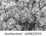 bush of succulents | Shutterstock . vector #640825954