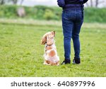 Stock photo dog and trainer outdoors rear view 640897996