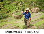 Rice farmer - stock photo