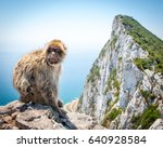 barbary macaque on rock of... | Shutterstock . vector #640928584