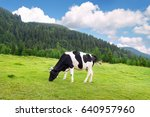 black and white cow grazing on... | Shutterstock . vector #640957960