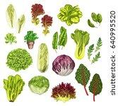 vegetable greens  salad leaf... | Shutterstock .eps vector #640995520