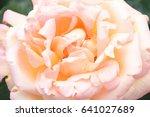 tokyo roses | Shutterstock . vector #641027689