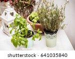 herbs | Shutterstock . vector #641035840