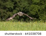 great grey owl or great gray... | Shutterstock . vector #641038708