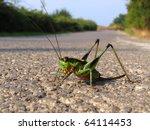 Green Grasshopper Posing On Th...