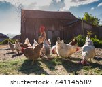 man feeding hens on the farm.... | Shutterstock . vector #641145589
