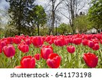 red tulips in a city park....   Shutterstock . vector #641173198