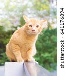 Stock photo orange cat look some thing cute cat cat lying on the wooden floor in the background blurred 641176894