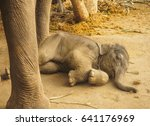 Stock photo baby elephant sleeping close to big elephant 641176969