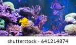 reef tank  marine aquarium full ... | Shutterstock . vector #641214874