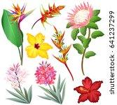 exotic flowers  strelitzia ... | Shutterstock .eps vector #641237299