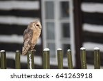 barn owl  tyto alba  is the... | Shutterstock . vector #641263918
